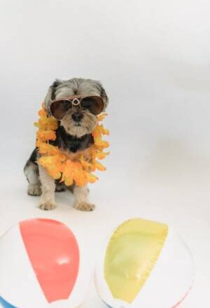 Why Toys Are Important For The Pets: Buy Pet Toys Online